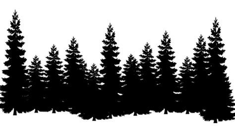 eastern white pine tree clip art cedar norway cover png
