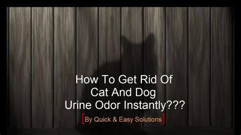 How To Get Rid Of Cat And Dog Pee Smell Instantly With Homemade Recipe Carpet For Pet Owners Pad Weight Best Burlington Cleaning Better Grammy Red Looks Sizing Chart Bleach Stains On Carpeting How To Remove Importers