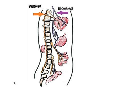 左 半身 しびれ 自律 神経