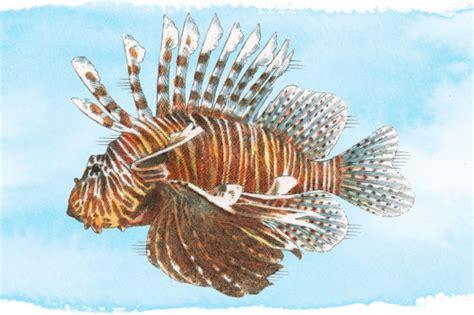 fish   eat   clean conscience grub street