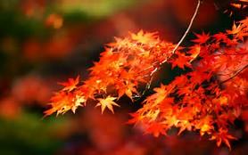 紅葉 に対する画像結果