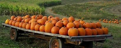 Pumpkin Patch Desktop Halloween Autumn Wallpapers Fall