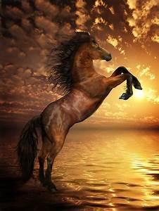 """Freedom - Rearing Horse Artwork"" by Shanina Conway ..."