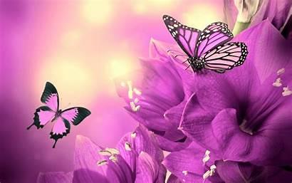 Butterflies Wallpapers Purple Flowers Butterfly Background Flower