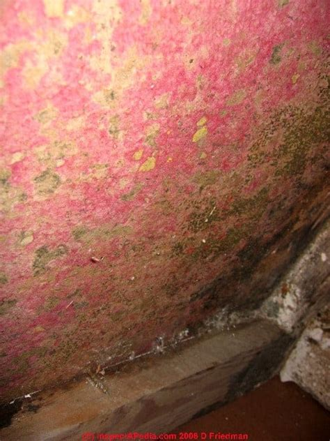 easy tips   rid  red mold   home mold guide