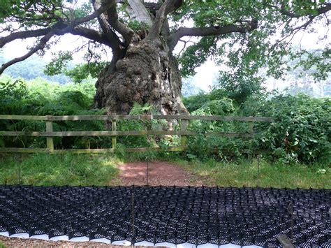 tree preservation orders tpos geosynthetics