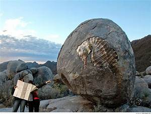 Giant fossil of a seahorse. : woahdude