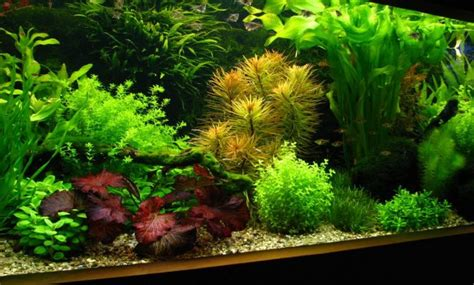 How To Make Aquascape by How To Create Aquascape With Style Aquascaper