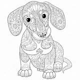 Coloring Dog Pages Adult Puppy Zentangle Dachshund Hard Drawing Stylized Colouring Sketch Freehand Doodle Isolated Ausmalbilder Background Illustrations Adults Vector sketch template
