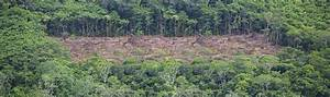 Deforestation in the Amazon | WWF