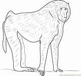 Baboon Designlooter sketch template