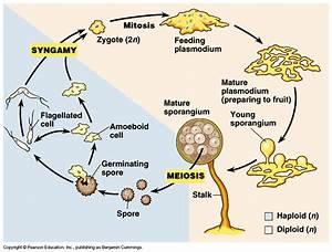Museum of Dust: The Garden :: Slime Molds