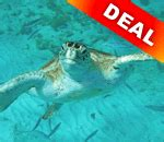 Glass Bottom Boat Tours Barbados by Barbados Glass Bottom Boat Rides