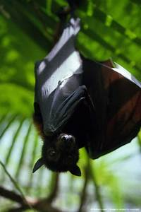 153 best images about BEAUTY IN BATS on Pinterest | Baby ...