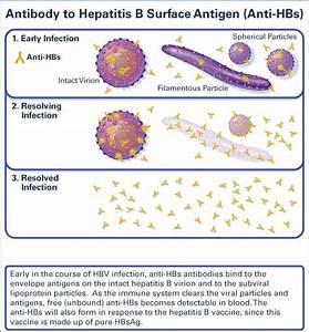 Antibody to Hep... Hepatitis B Surface Antibody