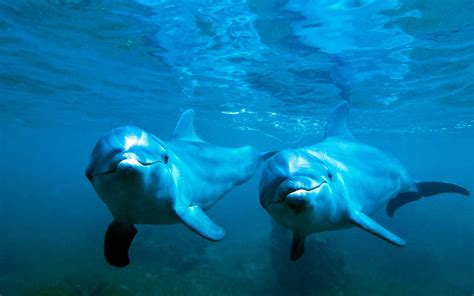 dolphin wallpaper dolphin awesome hd pictures images backgrounds high Underwater