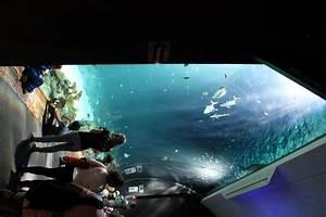 Fische Aquarium Hamburg : ein tag in hagenbecks tierpark lavendelblog ~ Lizthompson.info Haus und Dekorationen