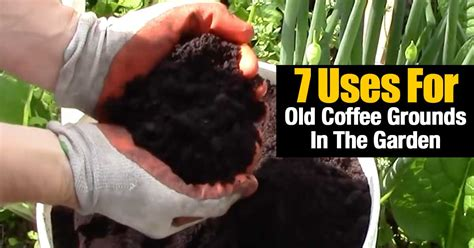 However, they increase the nitrogen, potassium in the soil. 7 Uses For Old Coffee Grounds In The Garden