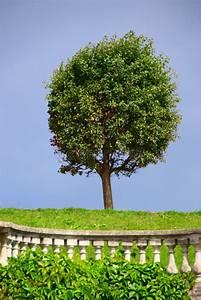 Buchsbaum Rund Schneiden : feinsteinzeug rund schneiden fliesen rund schneiden industriewerkzeuge ausr stung das ~ Frokenaadalensverden.com Haus und Dekorationen