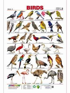 Spectrum Pre-School Kids Learning Laminated Birds Name ...