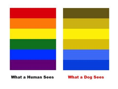 do dogs see color or black and white friday fact dogs do see colors mypositivedogtrainingblog