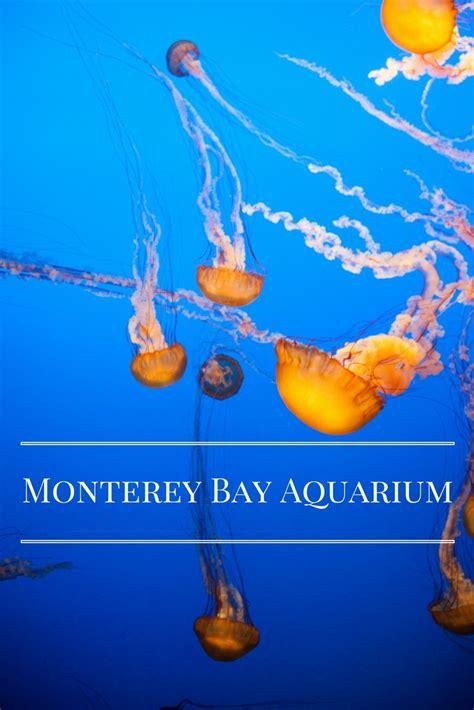 the monterey bay aquarium monterey bay aquarium adventure baby