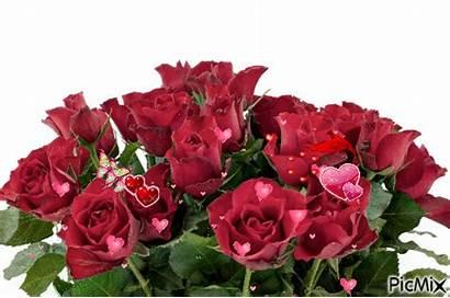 Roses Picmix