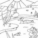 Pond Coloring Gambar Tuk Printable Animals Habitat Mewarnai Pemandangan Animal Baru Enyonge Disimpan Dari Kleurplaten Kind Dieren Viatico Mecoegstgeest Afkomstig sketch template
