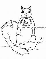 Squirrel Coloring Pages Print Acorn Squirrels Clipart Printable Holding Cliparts Clip 2550 June Posted Animal Library Coloringpages101 Popular Animalplace Comments sketch template