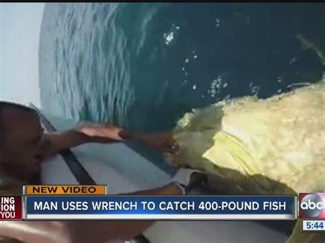 catches pound wrench florida grouper goliath fish