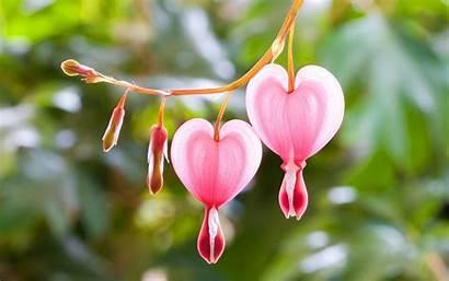 Heart Pink Flowers