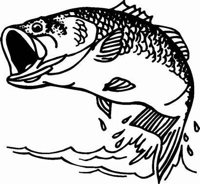 Clip Bass Fish Clipart Vector Fishing Coloring