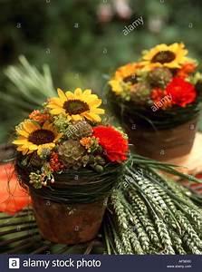 Tischdeko Mit Sonnenblumen : helianthus annuus terracotta stockfotos helianthus ~ Lizthompson.info Haus und Dekorationen