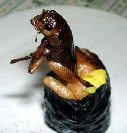 insect sushi edible creatures weird food sushi sushi