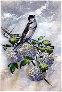 Beautiful Bird with Hydrangeas Image! - The Graphics Fairy  Bird