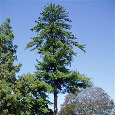 trees  tu walking  towson university