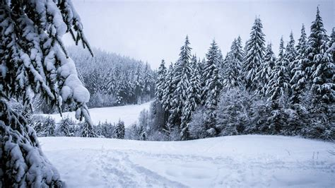 750x1334 beautiful snow green nature mobile phone snow beautiful nature green