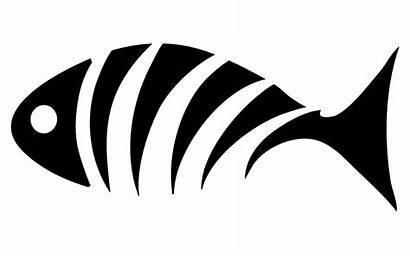 Fish Clipart Skeleton Bones Bass Clip Decals