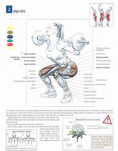 Squats  U2666  Health  Fitness  Exercises  Diagrams  Body