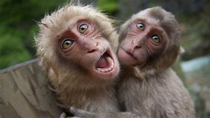 Funny Animals 1080p Wallpapers