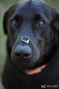 ring bearing dog steals the show at outdoor wedding With dog wedding ring