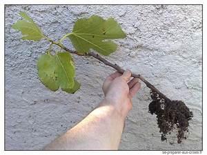 Profondeur Des Racines D Un Figuier : le bouturage permet de reproduire gratuitement les plantes se preparer aux ~ Nature-et-papiers.com Idées de Décoration