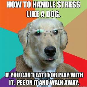 STRESSED MEMES image memes at relatably.com