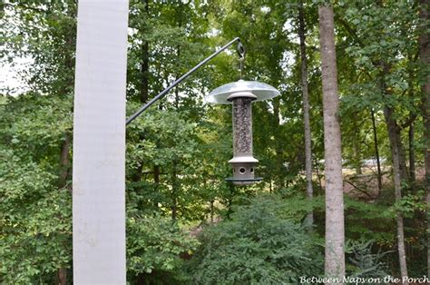 install a long swing arm hook for hanging plants or bird
