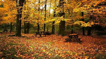 Autumn Forest Fall Nature Wallpapers Toamna Leaves