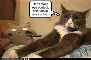 Crazy Cats With Captions | www.imgkid.com - The Image Kid ...
