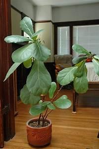 Grande Plante Verte : plante interieur grande feuille l 39 atelier des fleurs ~ Premium-room.com Idées de Décoration