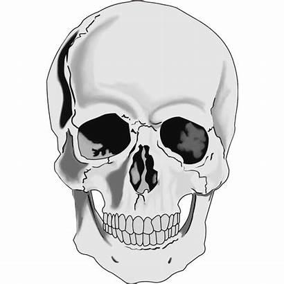 Skull Realistic Human Svg