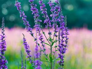 +3,000 Words on... Hyssop Quotes
