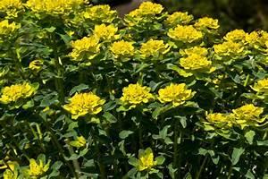 Pflanzen Für Trockene Schattige Standorte : mediterrane stauden sonnenbl her in ihrem garten ~ Michelbontemps.com Haus und Dekorationen